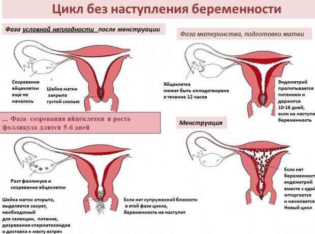 Если беременности идут месячные какие могут идти