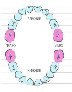 прорезывание молочных зубов: вторые моляры