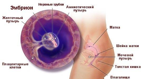 На 4 неделе беременности простуда
