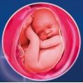 Готовимся к родам: что покажет УЗИ обследование на 40 неделе беременности?