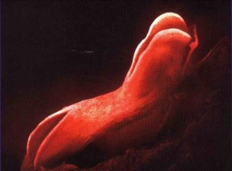 4 неделя беременности развитие плода