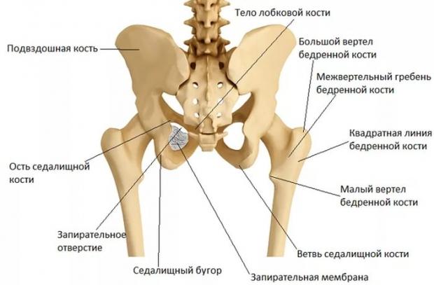 Мешает лобковая кость во время секса